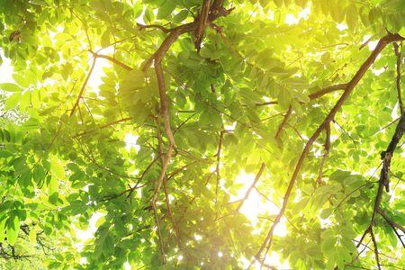 Die Sonne scheint durch die Bäume im Wald. Standard-Bild