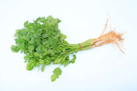 Coriander bunch isolated over white background. Top view