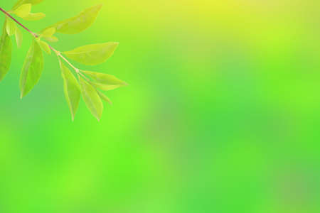 Green leaf isolated on blurred greenery background. Close Up fresh nature wallpaper in the garden Stock Photo