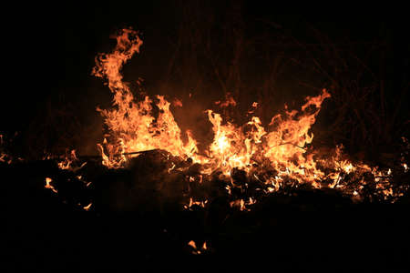 Fire flames burning dry grass on dark background. Banque d'images
