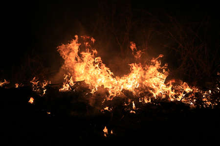 Fire flames burning dry grass on dark background.