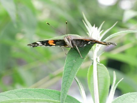 stealth: Stealth Butterfly