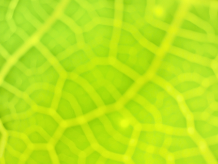 green Leaves Filament pattern blur background Stock Photo