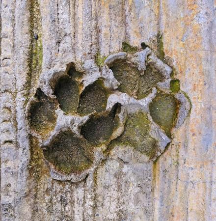 Animal footprints on the concrete floor. Banco de Imagens