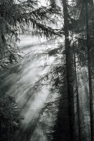 Morning fog in a forest.  photo