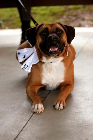 man's best friend: Mans best friend on a wedding day  Stock Photo