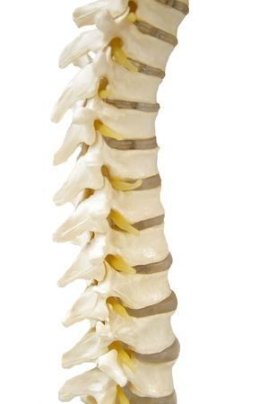 spinal cord: Spinal-column model  in doctors office