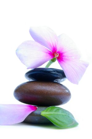 Smooth stones and pink flower photo
