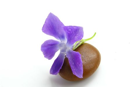 small purple flower: Smooth stone and small purple flower with dew drops Stock Photo