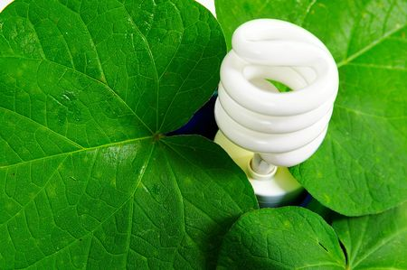 compact fluorescent light bulb and green leaves (green power) Stock Photo - 3580458