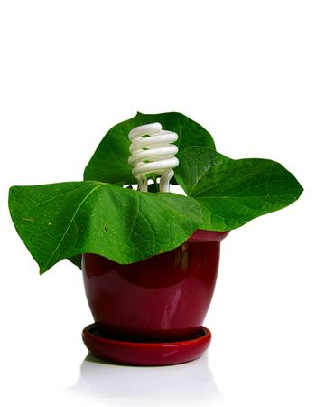 compact fluorescent bulb and a plant (green power), on white