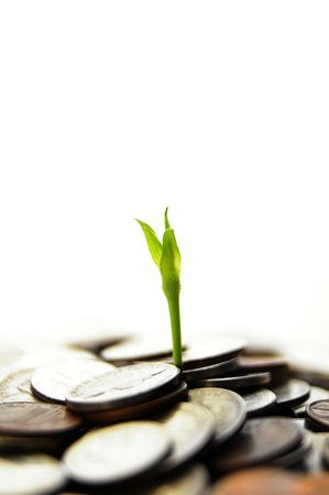 ira: new green plant shoot sprouting from coins