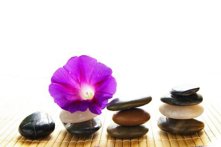 small purple flower: small purple flower balancing on smooth river stones Stock Photo