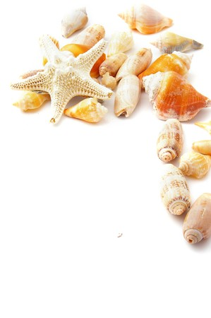 assorted beach shells in a border, on white Фото со стока
