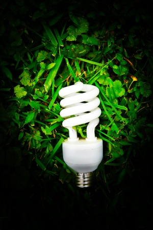 efficient light bulb in green grass Stock Photo