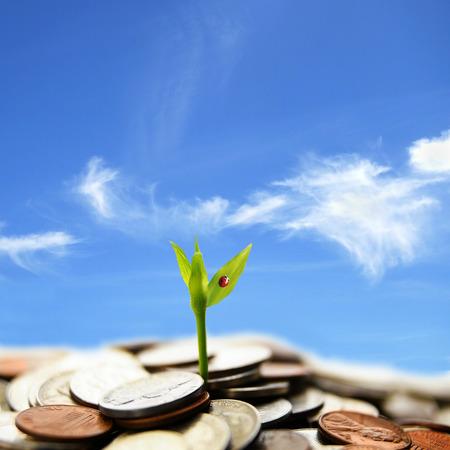 nestegg: new plant shoot growing from money, against blue sky