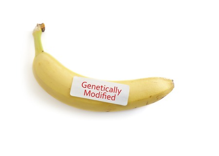 Banana on white with Genetically Modified label Stock Photo