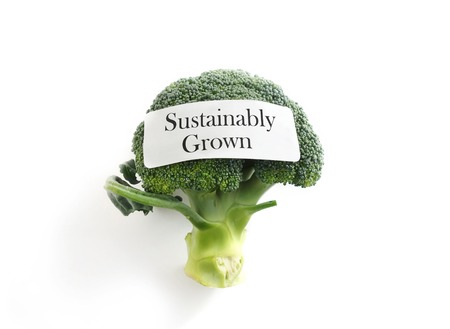 sustainably: Fresh broccoli on white with Sustainably Grown label