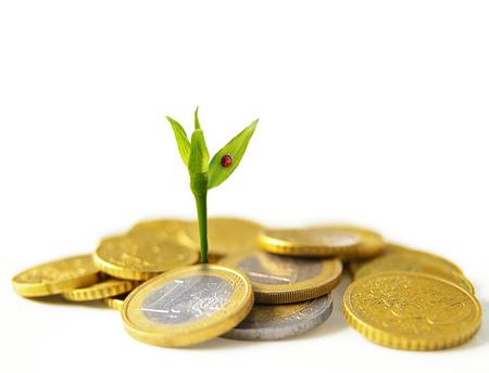 pflanze wachstum: new plant growth from Euro coins - financial growth concept Lizenzfreie Bilder