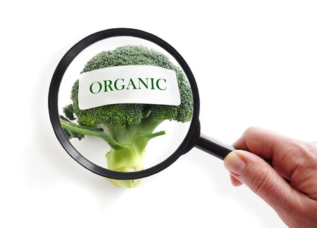 food inspection: Organic broccoli on white with magnifying glass