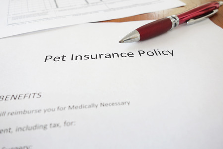 Pet Insurance policy with pen on a desk Stock fotó