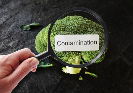 Besmettingsetiket op broccoli, onderzocht door een persoon met vergrootglas