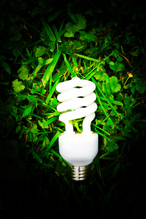 Energy fficient light bulb in green grass