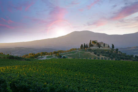 Vineyard grapes ready for harvest in Tuscany Italy with picturesque mountains and sunset