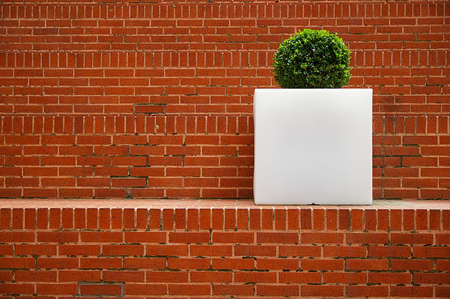 Brick steps with a single green plant in blank white planter Standard-Bild