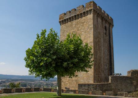 galicia: Tower and tree of castle Monforte de Lemos in Galicia, Spain