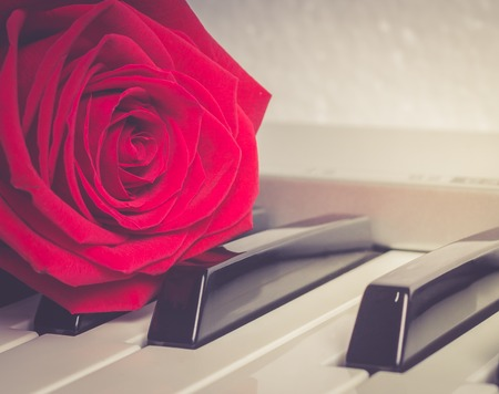 The red rose lying on piano keys