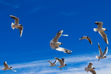 Flying seagulls in the blue sky Stock Photo