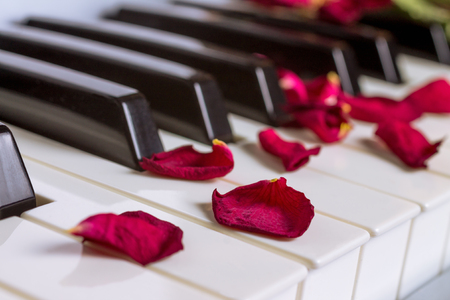 A dried rose petals on a piano keyboard
