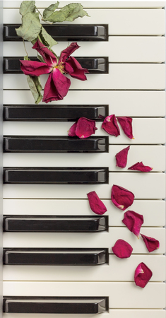 A dried rose petals on a piano keyboard. Selective focus Stock Photo
