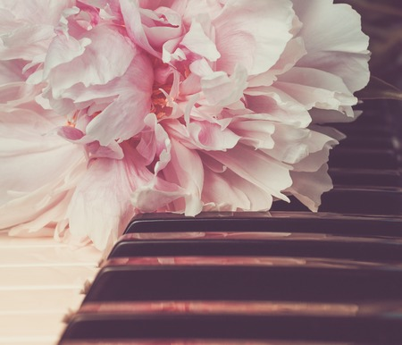 The pink peony lying on piano keys in vintage tone. Romantic concept. Copy space. Valentines Day background. Love song concept