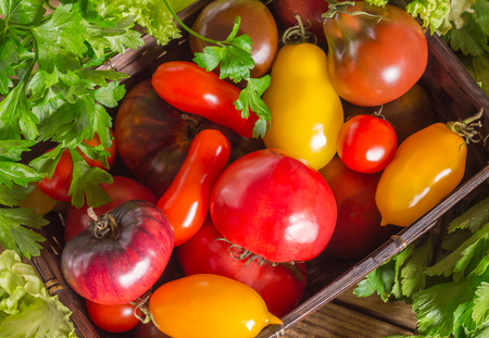 Many different tomato breeds and fragrant herb in a basket