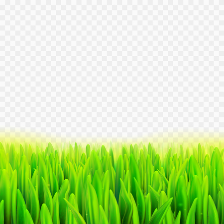 Stock vector illustration realistic macro grass. Summer and spring transparent background