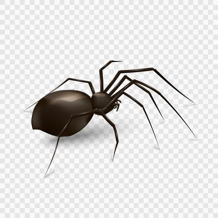 Stock illustrazione vettoriale ragno isolato su uno sfondo trasparente. EPS 10