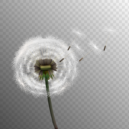 Stock vector illustration realistic dandelions isolated on a transparent background. Seed. EPS10 Vector Illustration