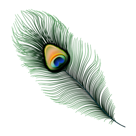 Stock vector illustration Peacock feather isolated on white background. EPS10
