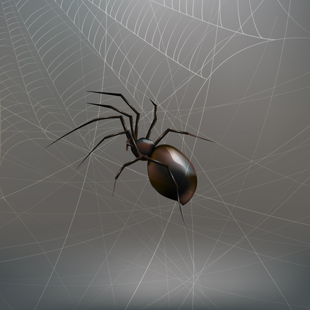 Illustration realistic black spider. light gray background Vectores
