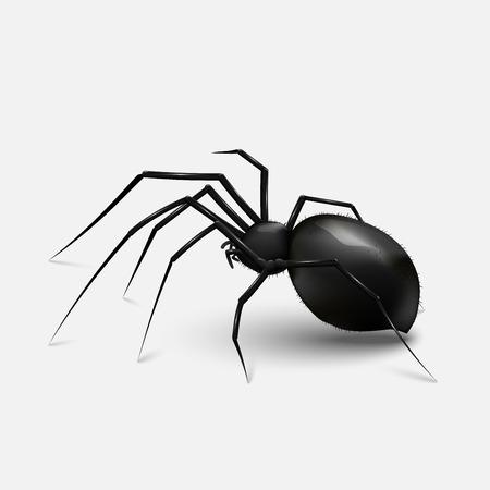 Ilustración araña negra realista. fondo gris claro
