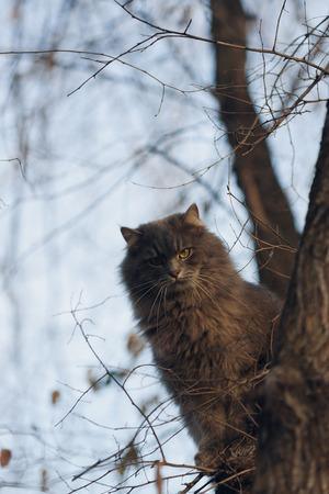 climbed: The cat climbed the tree and bird hunting!