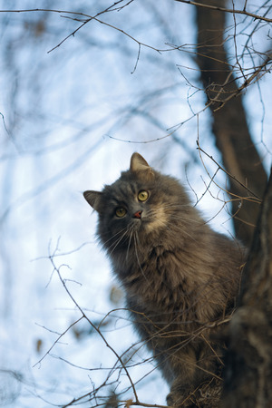 climbed: The cat climbed the tree and bird hunting!