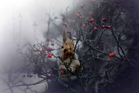 mysticism: Squirrel bramble bushes on a background of city park.