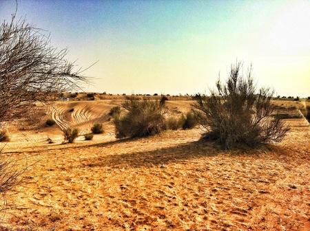 hiway: Desert between Hi-Way at Dubai,UAE