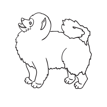 Cute countour spitz isolated on white background. Funny dog.