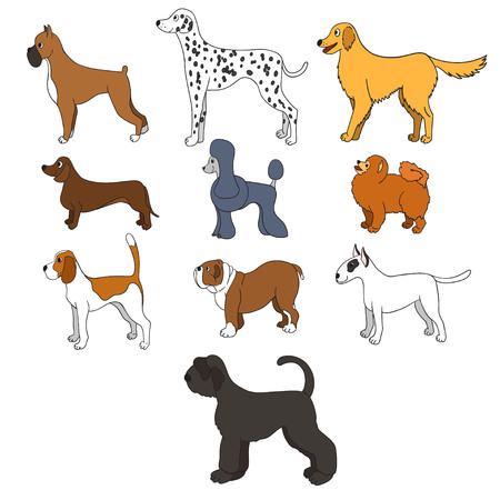Set of cartoon dog breeds isolated on white background.