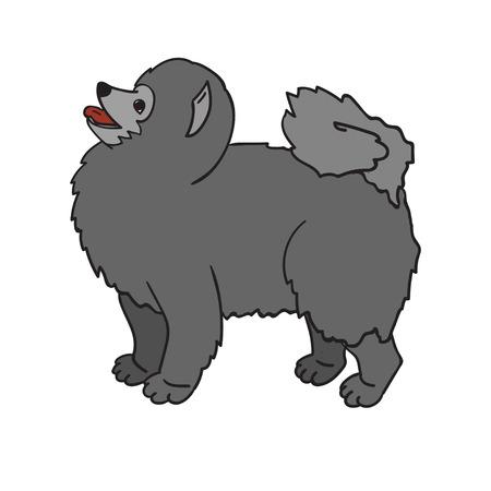 Cute grey spitz isolated on white background. Funny dog.