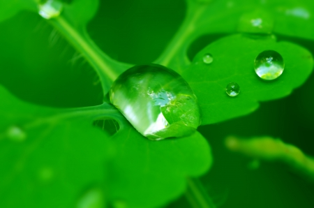 a drop of dew on a green leaf